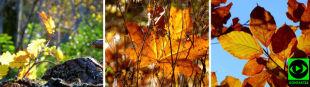 """""""Dywany liści w lasach"""". Internautka zachwycona urokami jesieni"""